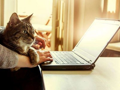 cat sitting in the arms of it's owner looking at the Wigglepon website