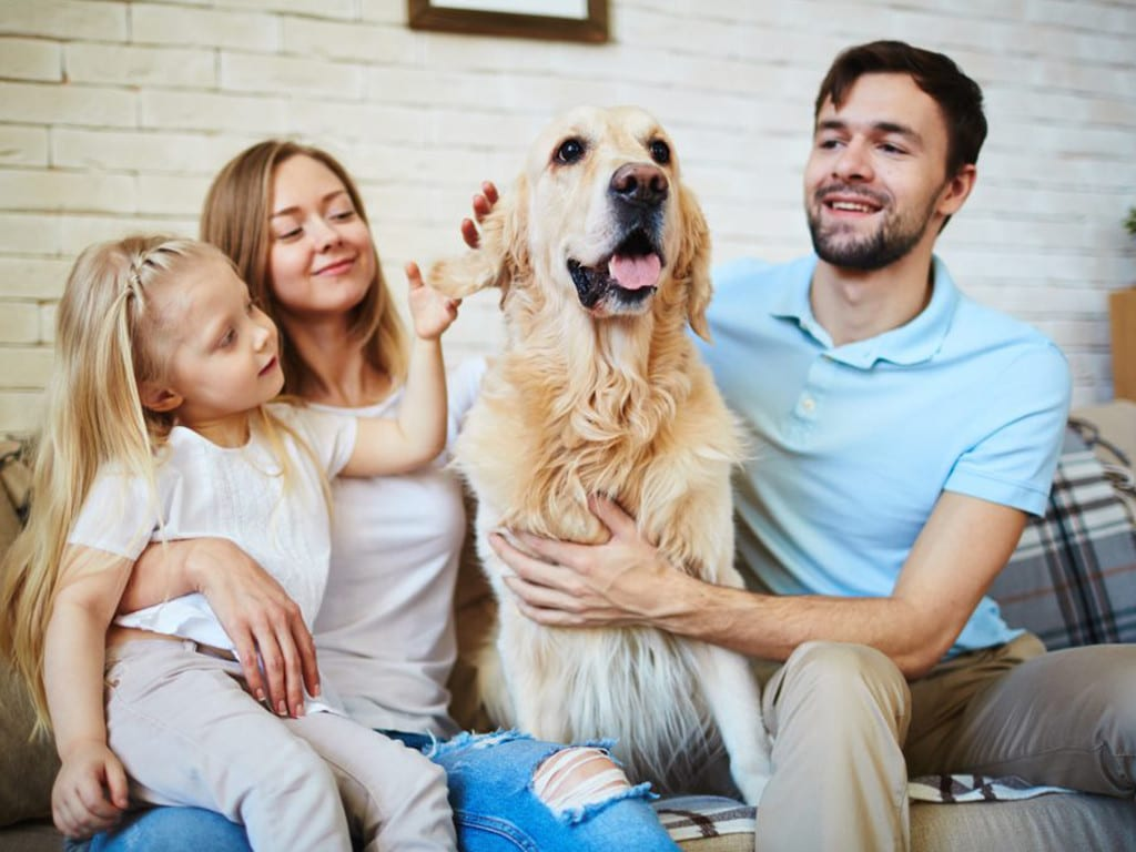 Mom, dad and little girl with their Golden Retreiver