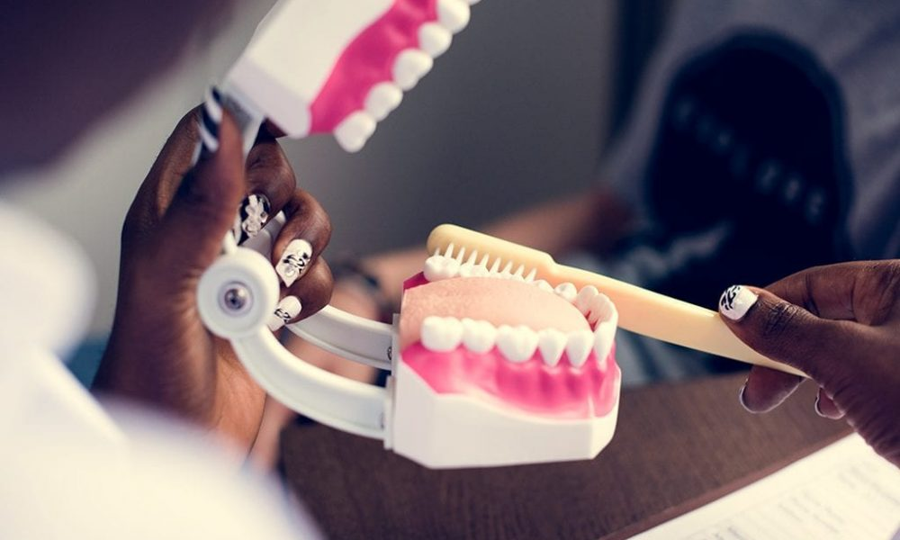 Fake dentures with toothbrush to demonstrate proper dental care